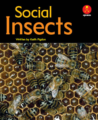 Level 22 : 社会性のある昆虫とは?