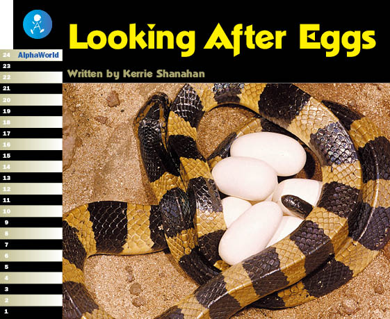 Looking After Eggs