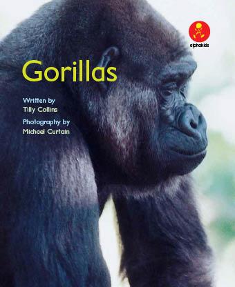 Level 11 : Gorillas